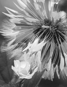 Seeding by Barbara Mundt