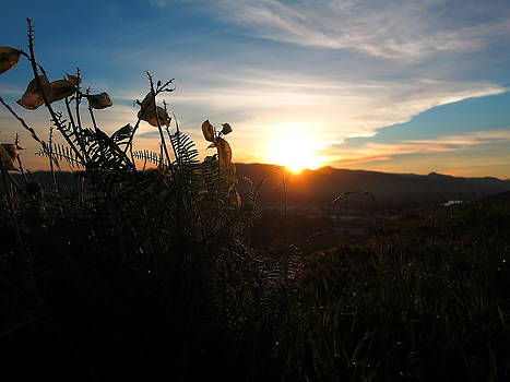 Seedpods at Sundown by Paul Foutz