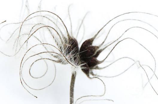 Anne Gilbert - Seeds