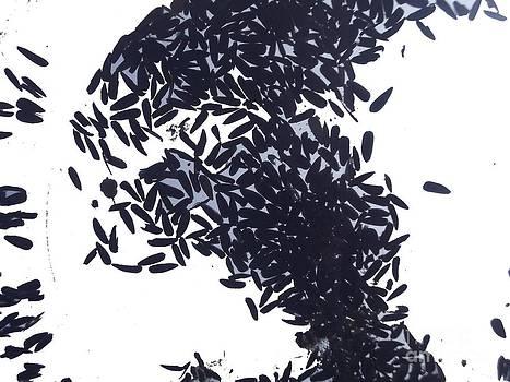 Seeds by Demetrius Cotta