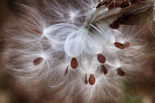 Dawn J Benko - Seeds of Tomorrow