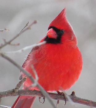 Seeing Red on a Gray Day by Lori Frisch