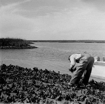 Sewee Bay by Vennie Deas Moore