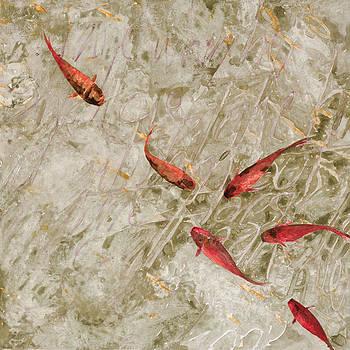 Guido Borelli - sei pesci rossi