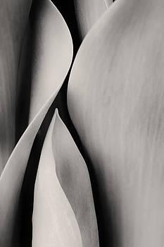 Sensual Nature 2 by Claudio Bacinello
