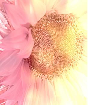 Debra  Miller - Sensual Sunflower Bloom