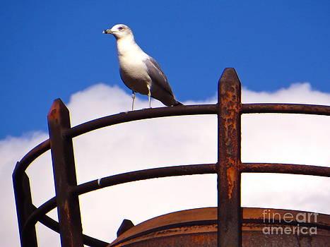 Sentinel Sea Gull by Joy Hardee
