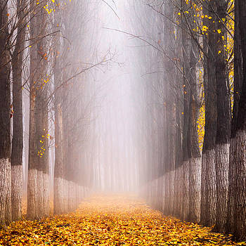 Sentinels by Evgeni Dinev