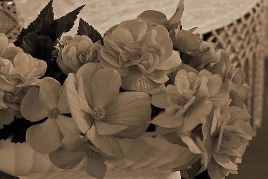 Sandra Foster - Sepia Begonias