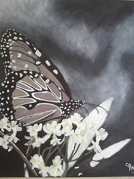 Sepia Butterfly by Carol Northington