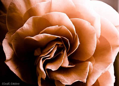 Cindi Castro - Sepia Camellia