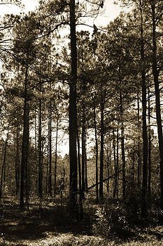 Carolyn Stagger Cokley - sepia forest 4015