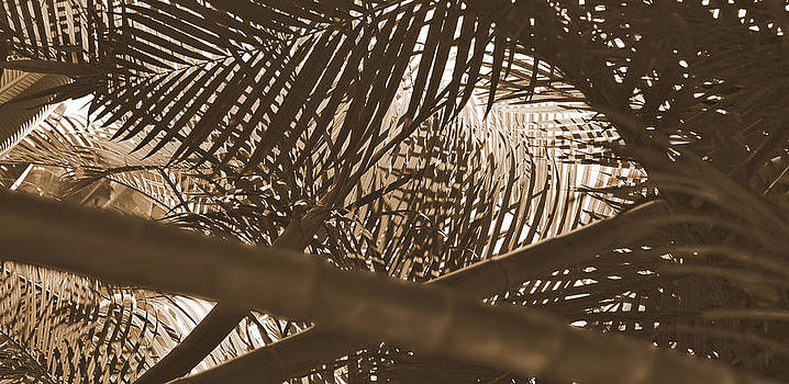 Herb Paynter - Sepia Palms