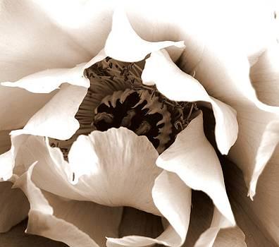 Sepia Peony by Mamie Gunning