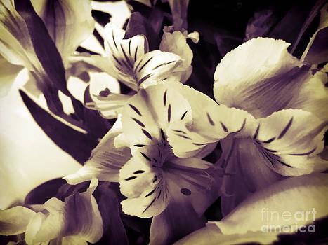 Anne Ferguson - Sepia Petals
