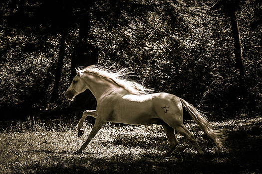 Wes and Dotty Weber - Sepia Stallion