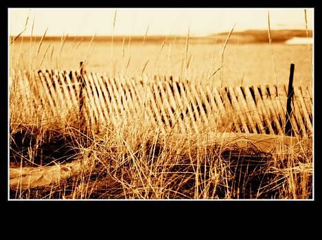 Rosemarie E Seppala - Sepia Tone Living Shoreline Ecosystem