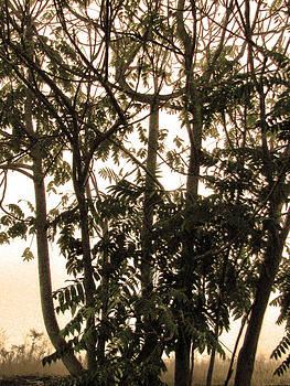 Joe Bledsoe - Sepia Tree