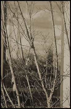 Joe Bledsoe - Sepia tree no.2