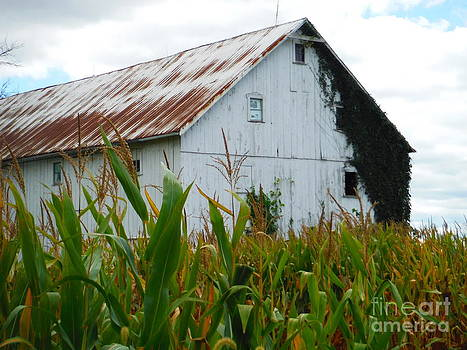 Paddy Shaffer - September Corn Barn