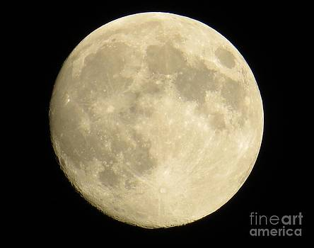 September Moon by Judy Via-Wolff