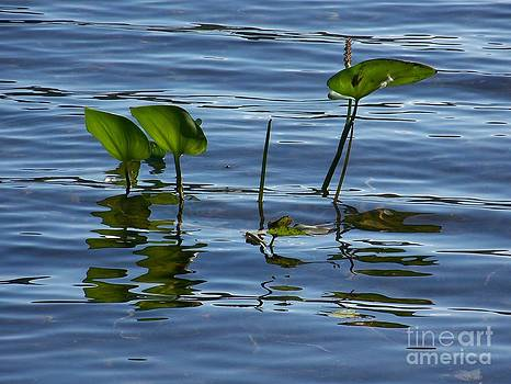 September Reflections by Jackie Mueller-Jones