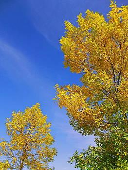 September Sky by Debi Dmytryshyn