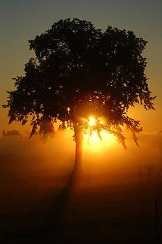 September Sunrise by Jann Kline