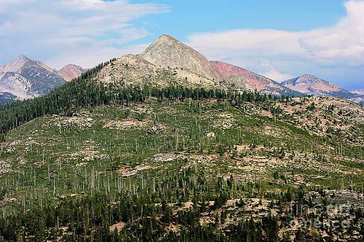Sophie Vigneault - Sequoi National Park