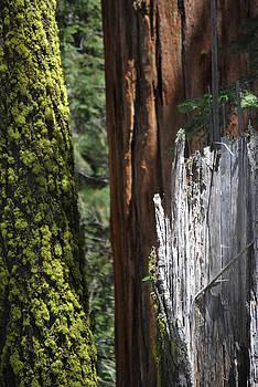 Jeff Brunton - Sequoia-Kings Canyon NP 213