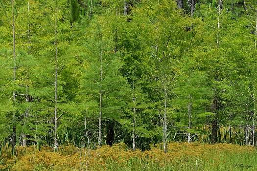 Patricia Twardzik - Serene Golden Forest