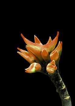 Ramabhadran Thirupattur - Serene - Unruffled