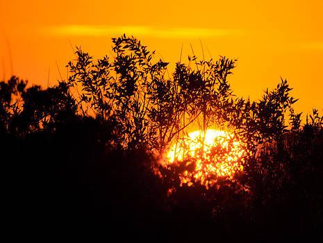 Serengeti Sunset by Joshua Ayers