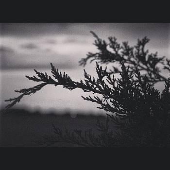 Serenity by Patrick Jay