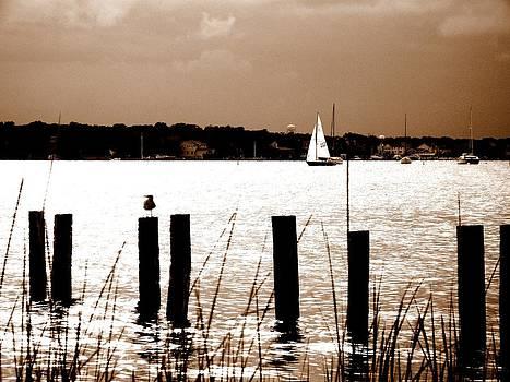 Rick Todaro - Serenity