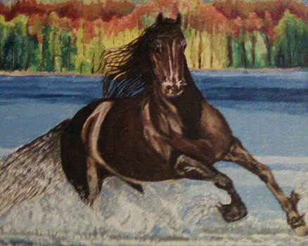 Serocko by Sandra Wilson