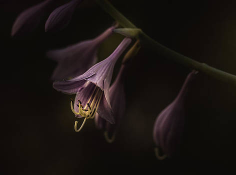 Set You Free by Paul Barson