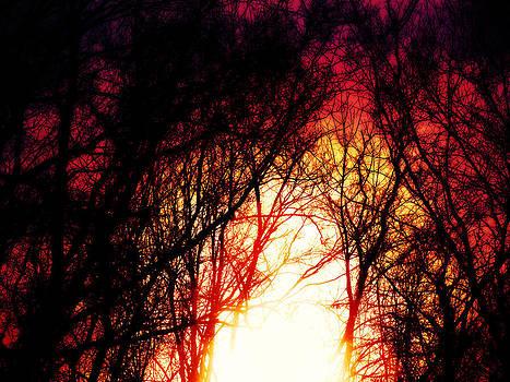 Setting Sun by Tonya Scales