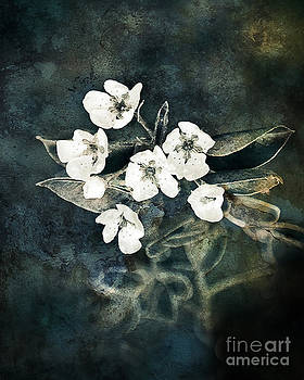Seven White Flowers by Miss Dawn