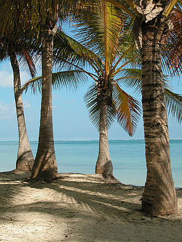 View of the Sea from the Shade Under the Palms by Rob Huntley