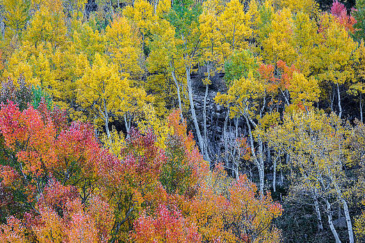 Shades of Autumn by Colleen Coccia