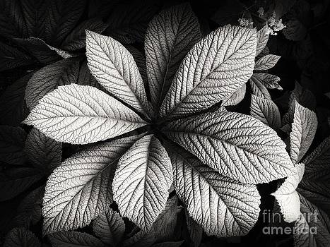 Shades of Gray by Nicola Fiscarelli