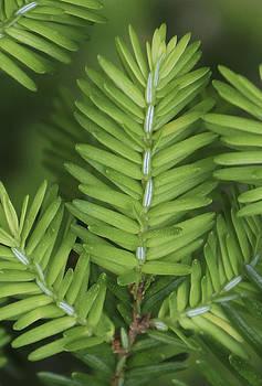 Dawn Hagar - Shades of Green