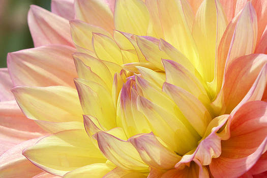 Shades of Happiness by Cindy McDaniel