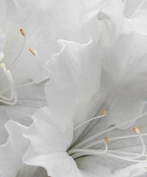 Shades of White by Steven Huszar
