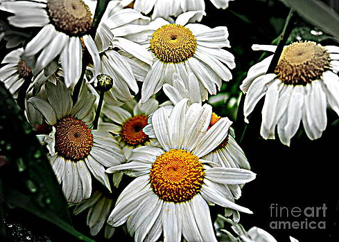 Shades Of Yellow by Christy Phillips