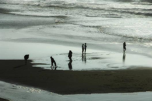 Donna Blackhall - Shadow Beach