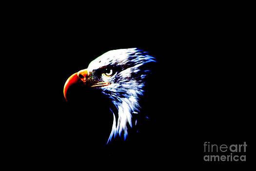 Nick Gustafson - Shadow Eagle