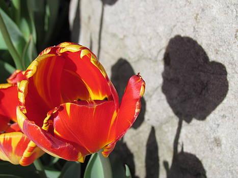 Shadow of Joy by Dianne Furphy