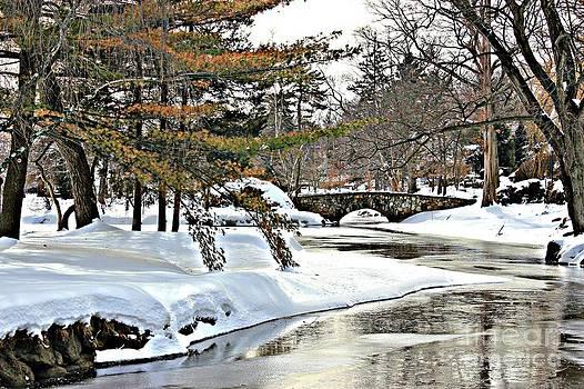 Shadows In The Snow by Judy Palkimas